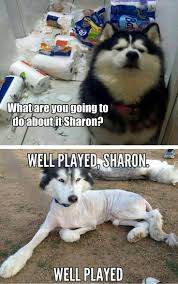 Pun Husky Meme - funny dog pictures of the day 35 pics funnydoghilarious dogs