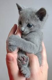 25 kitty cat pictures ideas kittens cutest