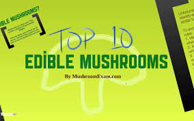 top 10 edible mushrooms youtube