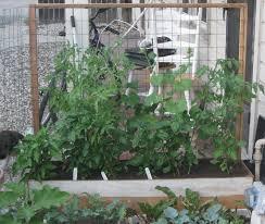 my first garden june 2012