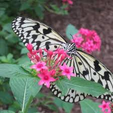 butterfly gardening in arkansas arkansas pollinator garden resources