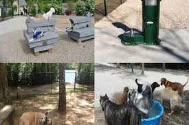 vote for the best dog park on cape cod curbed cape cod