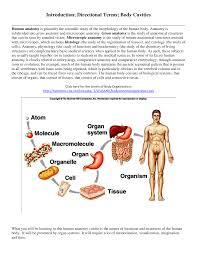 Directional Terms Human Anatomy Introduction Directional Terms Body Cavities Cell Biology