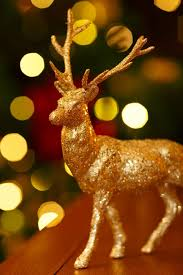 who are the christmas reindeer history and names animalwised