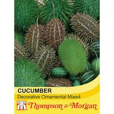 cucumber decorative ornamental mixed seeds thompson
