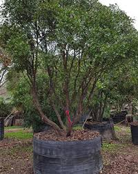 contact alfaro tree sales inc for lawn and garden services in san