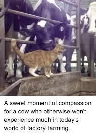 Memes Factory - 25 best memes about factory farming factory farming memes