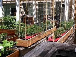 inside urban green a rain gutter go anywhere micro farm