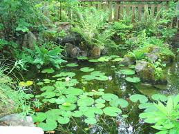native plants water gardeners use native plants to create a healthy garden pond