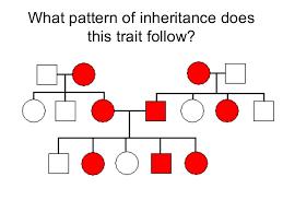 genetics practice problems pedigree tables genetics pedigree problems