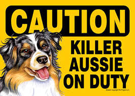 australian shepherd gifts killer australian shepherd on duty dog sign magnet velcro 5x7