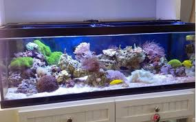 current usa orbit marine aquarium led light current usa orbit led light reef2reef saltwater and reef aquarium
