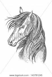 horse pencil sketch portrait vector u0026 photo bigstock