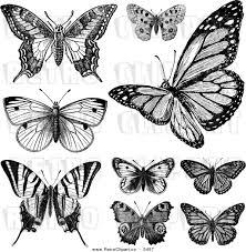 vector clipart of retro black and white vintage butterflies on