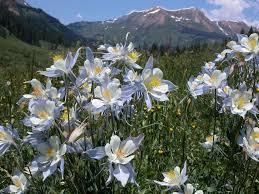 colorado native plant society colorado wildflower hikes meetup denver co meetup