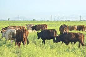 pastoralism local knowledge and biodiversity in post soviet