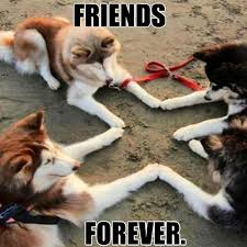 Funny Tgif Memes - best friend memes to keep your friendship strong