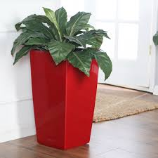 Self Watering Square Lechuza Cubico Self Watering Indoor Planter Hayneedle