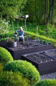 sweet viburnum 200mm pot viburnum 10 best our top 10 hedging plants images on pinterest hedging