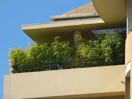 balkon bambus sichtschutz bambus im kübel kaufen bambusbörse