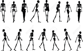 halloween skeleton silhouette vector image skeleton silhouette in walk pose isolated on white