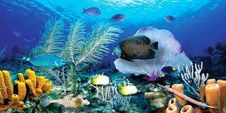 ocean reef get biggies ocean reef wall mural