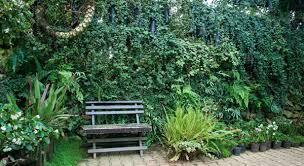 vertical gardens green walls and vertical gardens lifestyle home