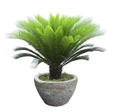 pet friendly house plants entirelypets blog