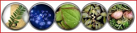 obat biomanix asli jual biomanix di indonesia