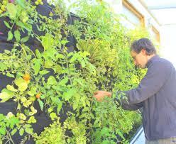 aquaponic vertical vegetable garden u2014 florafelt vertical garden
