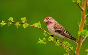 bird on a branch wallpapers and images wallpapers pictures photos