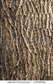 wood tree texture background pattern stock photo 131666099