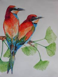 colored birds by swiftwind01 on deviantart