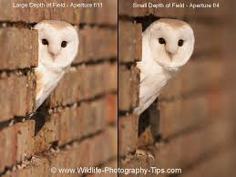 Barn Owl Photography Beginners Photography Stunning Shots In Simple Lessons