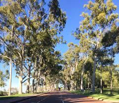 Kings Park Botanic Garden by Kings Park And Botanic Garden Jremembrance