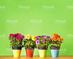flower pot pictures images and stock photos istock