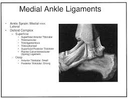 Ankle Ligament Tear Mri Radiology Cases Lateral And Medial Ankle Ligaments