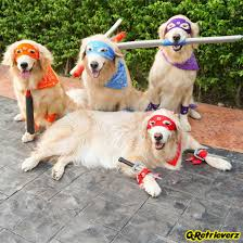 animals halloween the best animals in halloween fancy dress irish mirror online