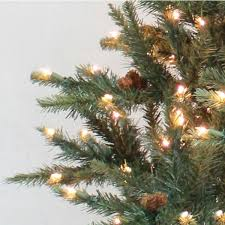 stein u0027s garden u0026 home neuman tree franklin fir 7 ft w clear