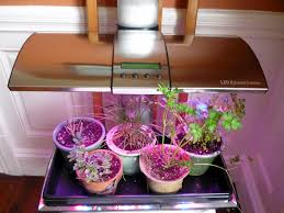 Grow Lights For Indoor Plants Canada by Best Grow Lights For Indoor Plants Comfy These Are The Ts Same
