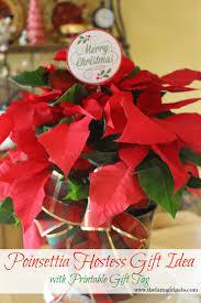 poinsettia care and hostess gift idea www thefarmgirlgabs com