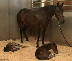How To Tell If A Horse Is Blind Horse Lays Down To Give Birth Then Her Owners Are Baffled When