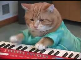 Cat Playing Piano Meme - funny cat playing piano youtube
