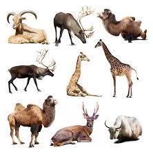 what makes an animal a mammal wonderopolis