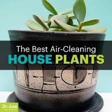 best house plants the best houseplants that remove pollution dr axe