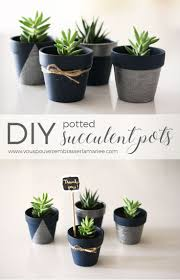 best 25 succulent pots ideas on pinterest indoor succulents