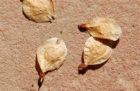seed of the week elm growing with science