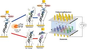 bioelectrochemistry of nucleic acids for early cancer diagnostics