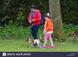 banana joe affenpinscher pedigree best dog in show stock photos u0026 best dog in show stock images alamy