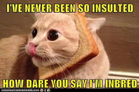 Funny Rude Memes - i ve never been so insulted lolcats lol cat memes funny